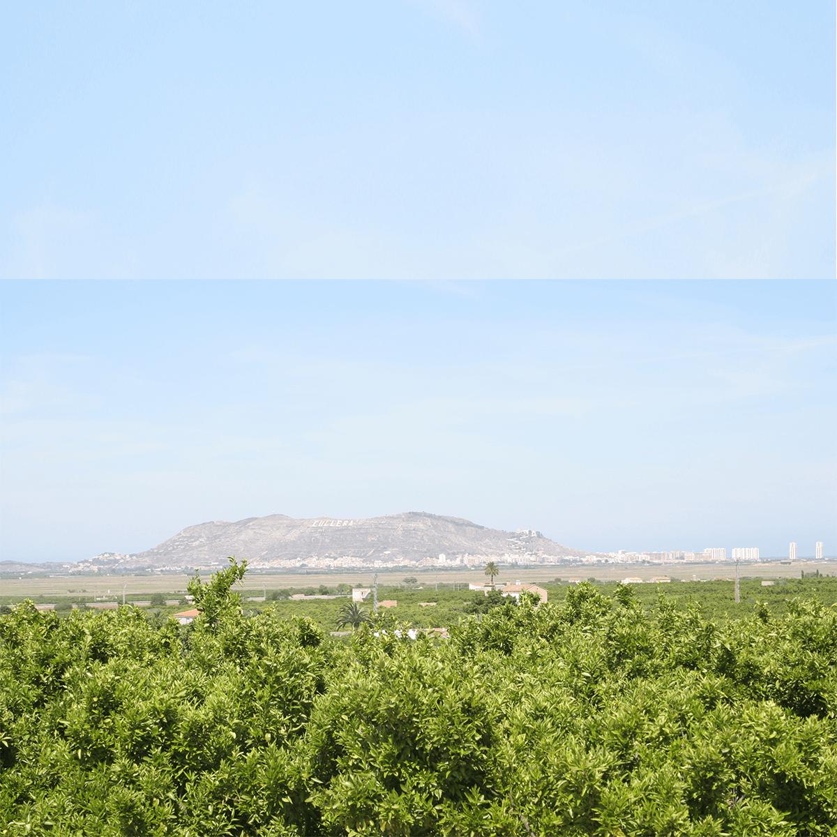 Albufera_de_Valencia_2